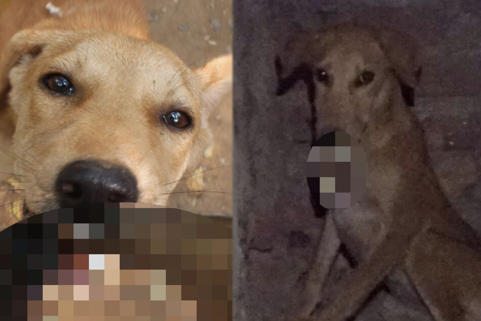 Hund gibt Rettern Rätsel auf: Was sollen sie denn jetzt mit ihm tun?