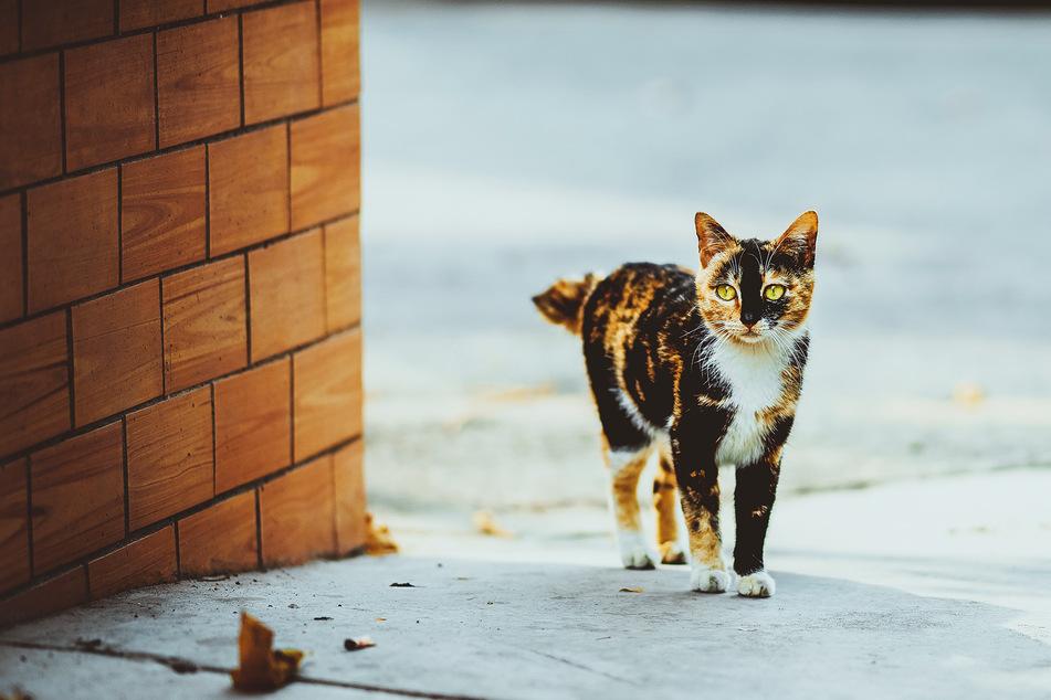 """Die Katze stand plötzlich vor einer Imbissbude und """"torkelte"""" über den Weg. (Symbolbild)"""