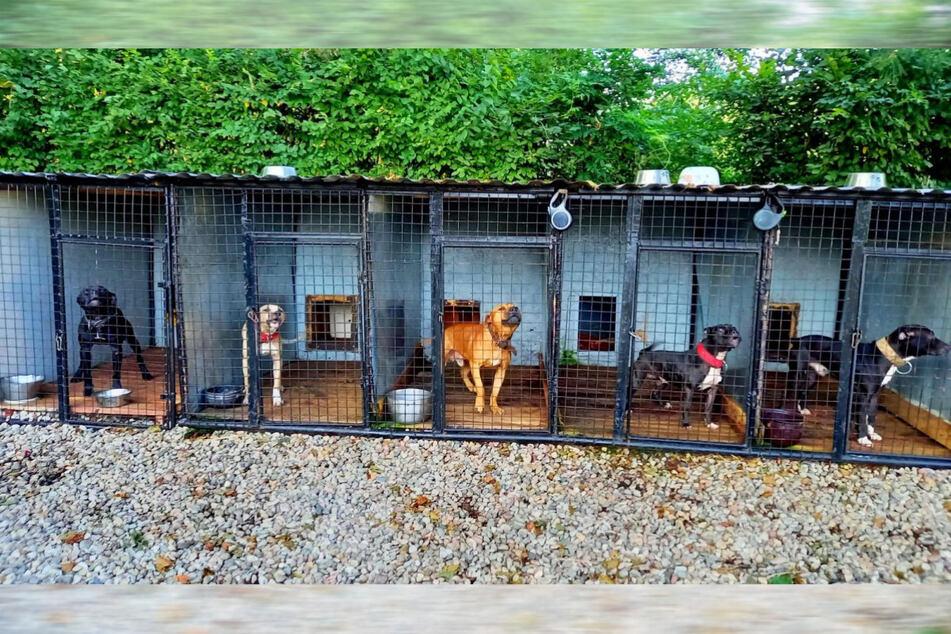 In Polen hielt ein Mann (41), der Hundekämpfe organisiert haben soll, mehrere Tiere in viel zu kleinen und dreckigen Käfigen.