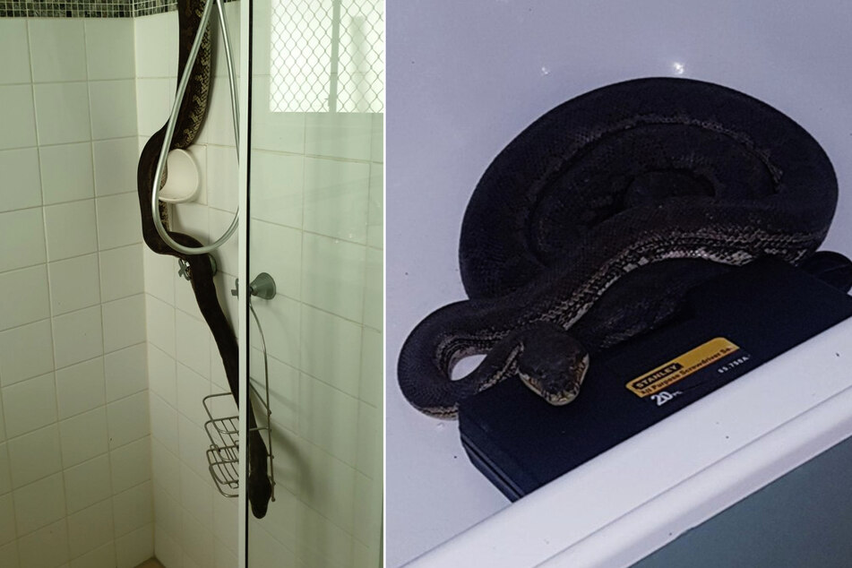 Snake chilling in the bathroom gives resident the shock of his life