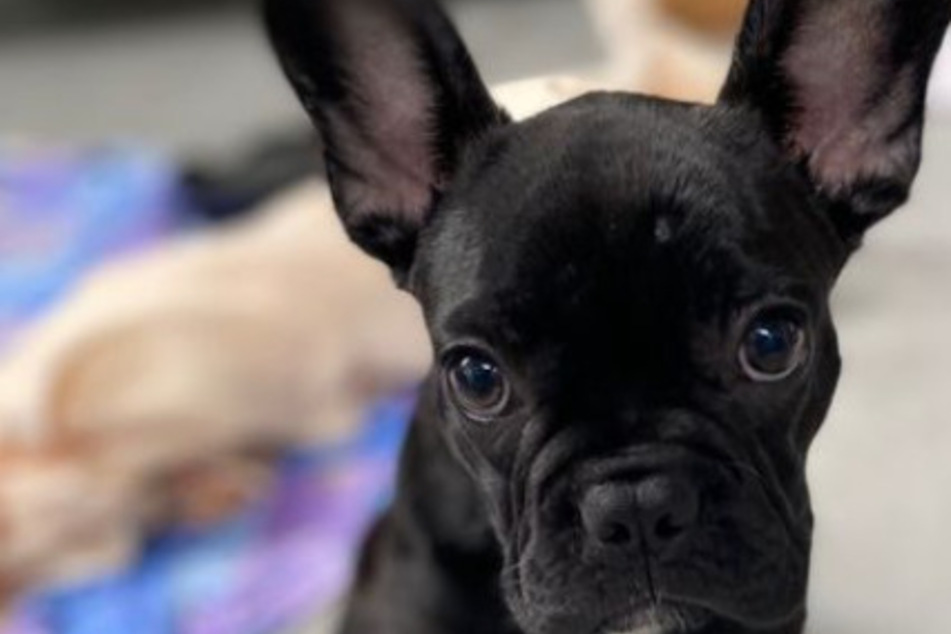 """Der kleine Hund """"Jack"""" sollte zunächst eingeschläfert werden. Dem Besitzer war das aber zu teuer!"""