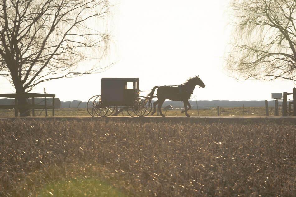 Im Landkreis Oberallgäu ist ein Pferd mit einem Sechsjährigen durchgegangen. (Symbolbild)