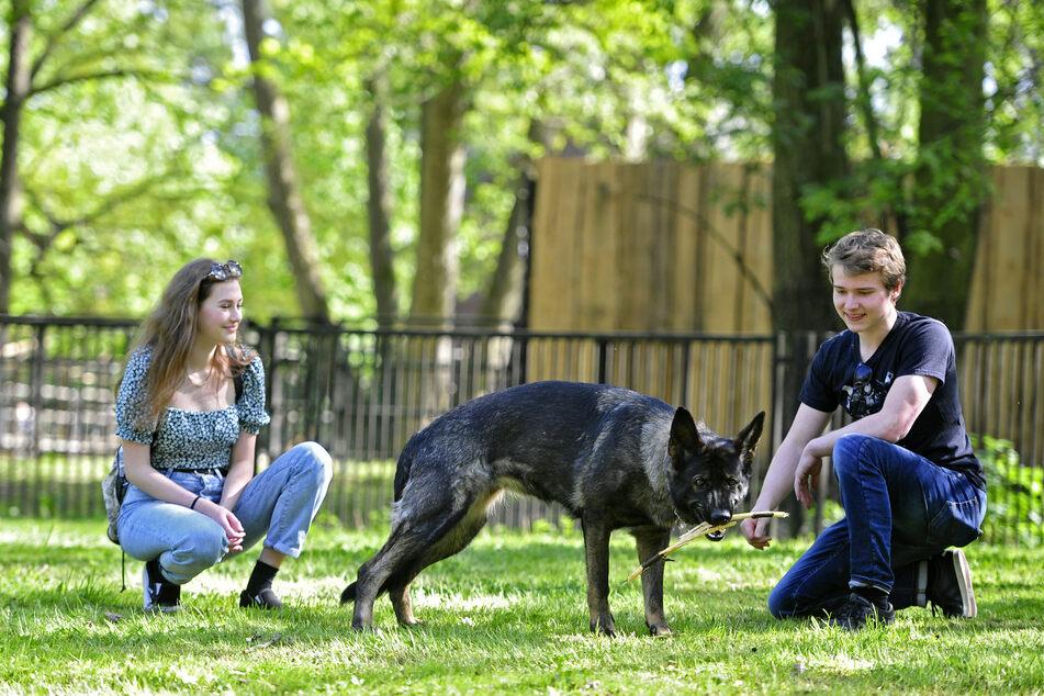 Chemnitz und seine Hunde: Neun Zahlen mit Wau-Faktor