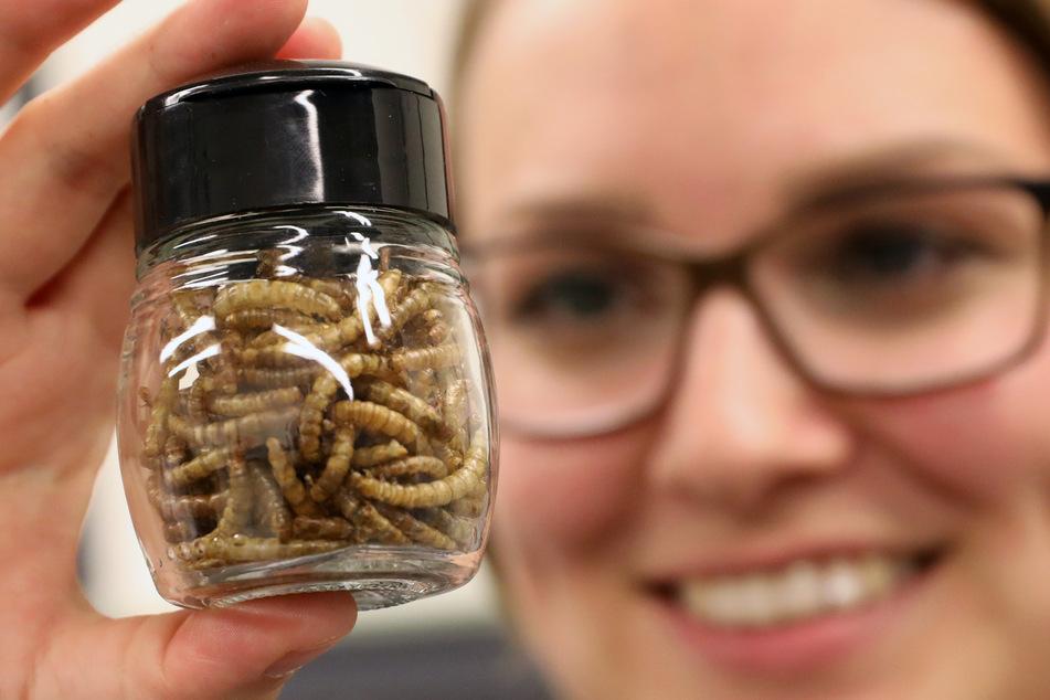 Erster Spatenstich für Produktionsanlage: 1,5 Tonnen Mehl aus Würmern für Lebensmittel