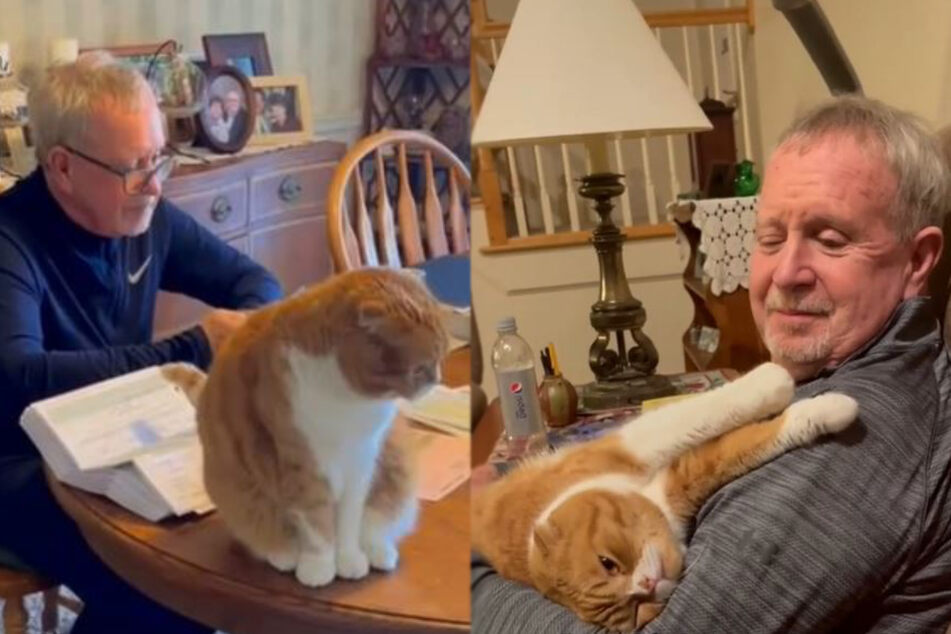 Cat cares for cancer patient in incredibly moving friendship