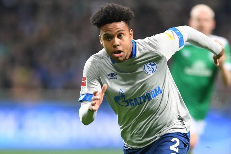 Holt sich Hertha Schalkes Weston McKennie?