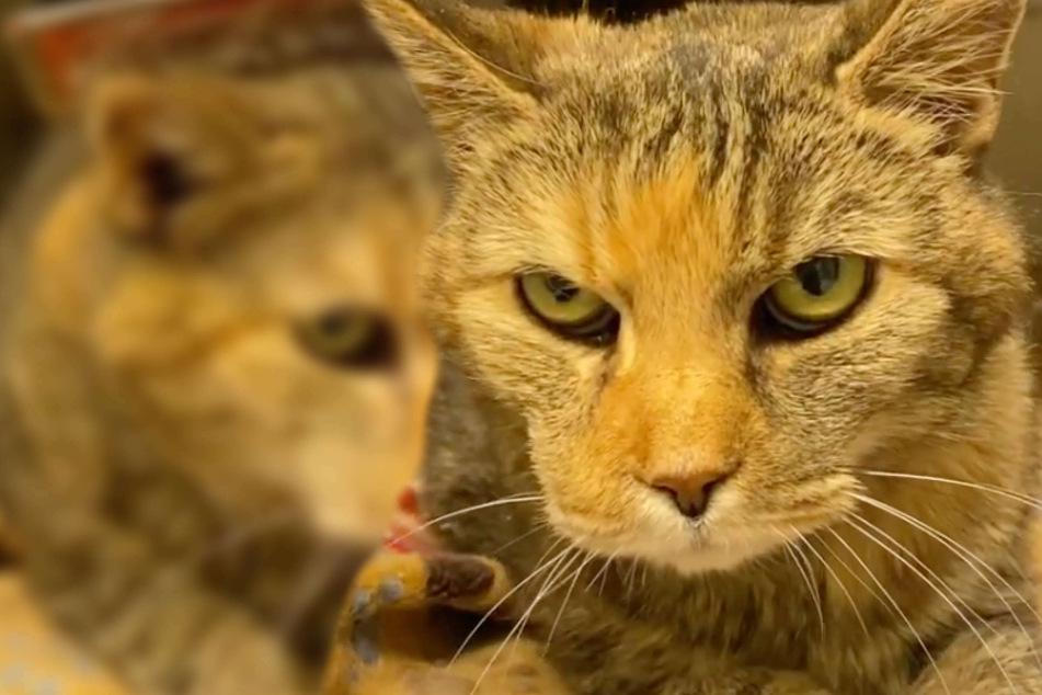 Katze landet nach 16 Jahren plötzlich im Tierheim: Der Grund macht wütend