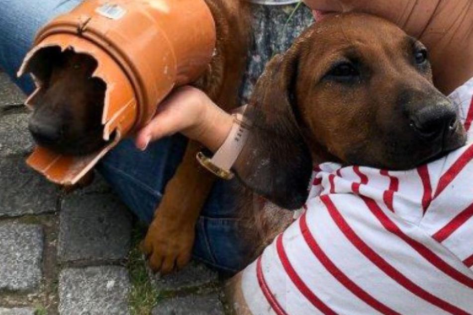 Sind Hunde dankbar? Dieser Hund verrät es eindeutig!