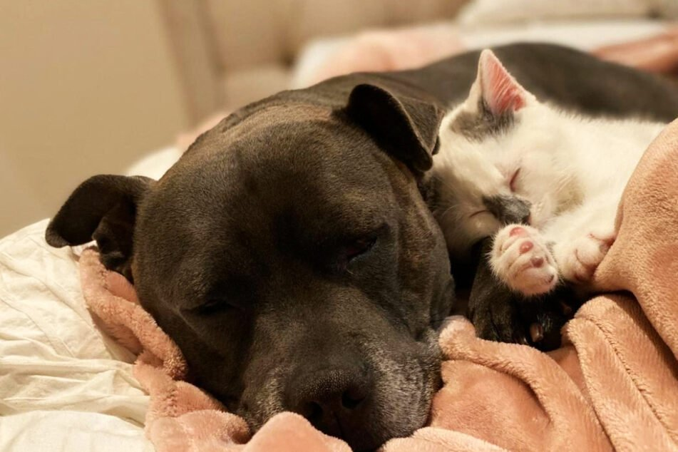 Adorable dog and rescue kitten become best buds after a bumpy start