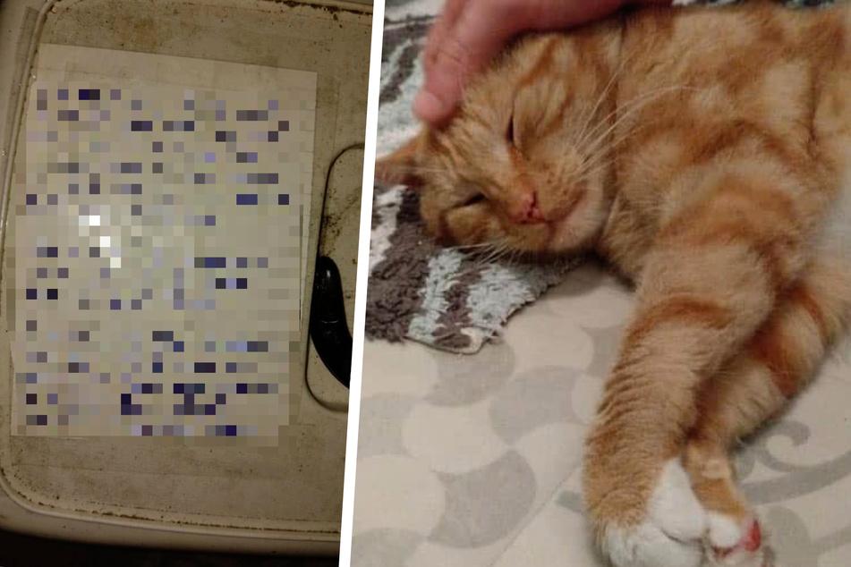 Katze in Box ausgesetzt: Der Grund bricht Tierliebhabern das Herz
