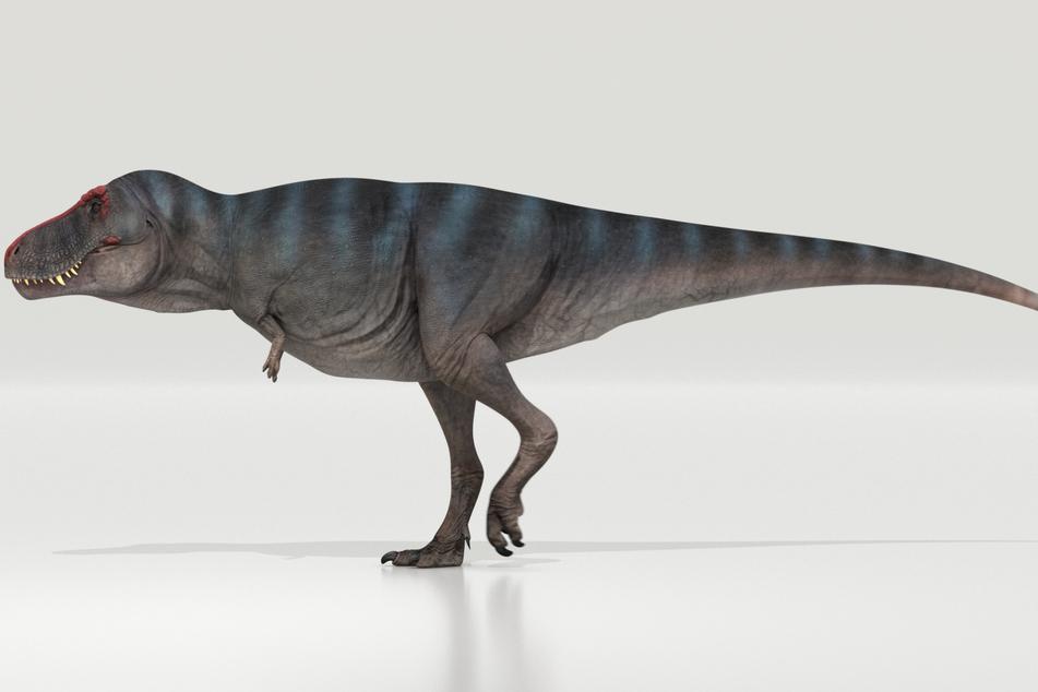 So ein T-rex war von Nasenspitze bis Schwanzende gerne mal bis zu 13 Meter lang. Allzu schnell laufen konnten die berühmten Dinos allerdings nicht.