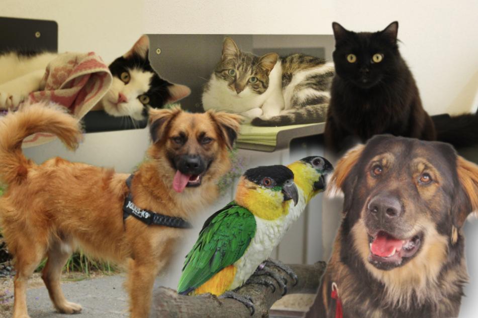 7 besondere Tiere: Diese Hunde, Katzen und Vögel wollen adoptiert werden