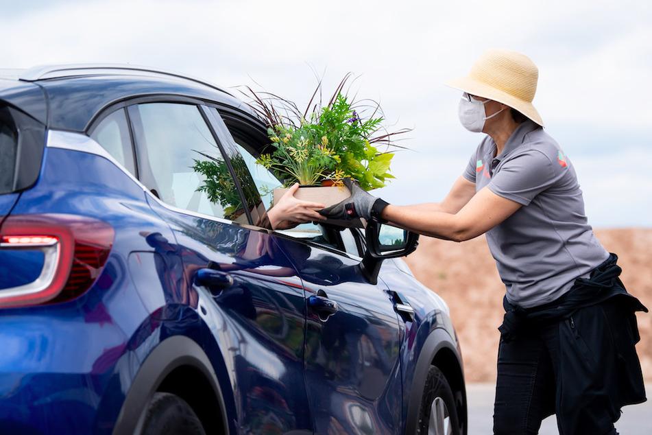 Mitarbeiter der Landesgartenschau verteilen an einem Drive-in Schalter Blumen.