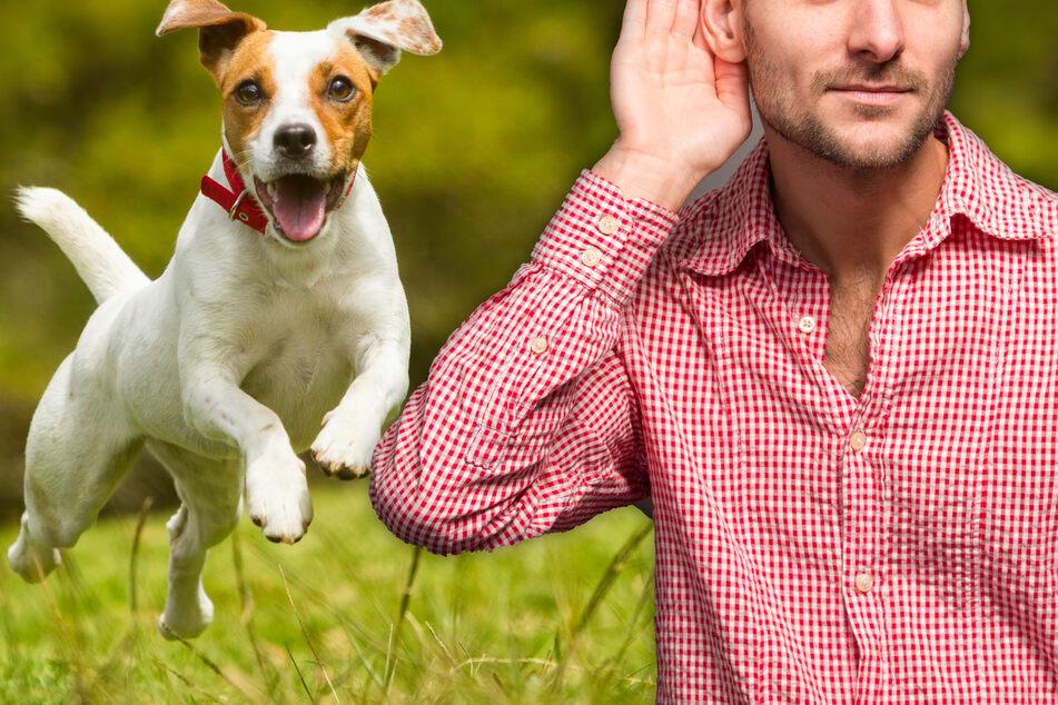 Spitzt die Lauscher! Das haben wir Menschen mit Hunden gemeinsam