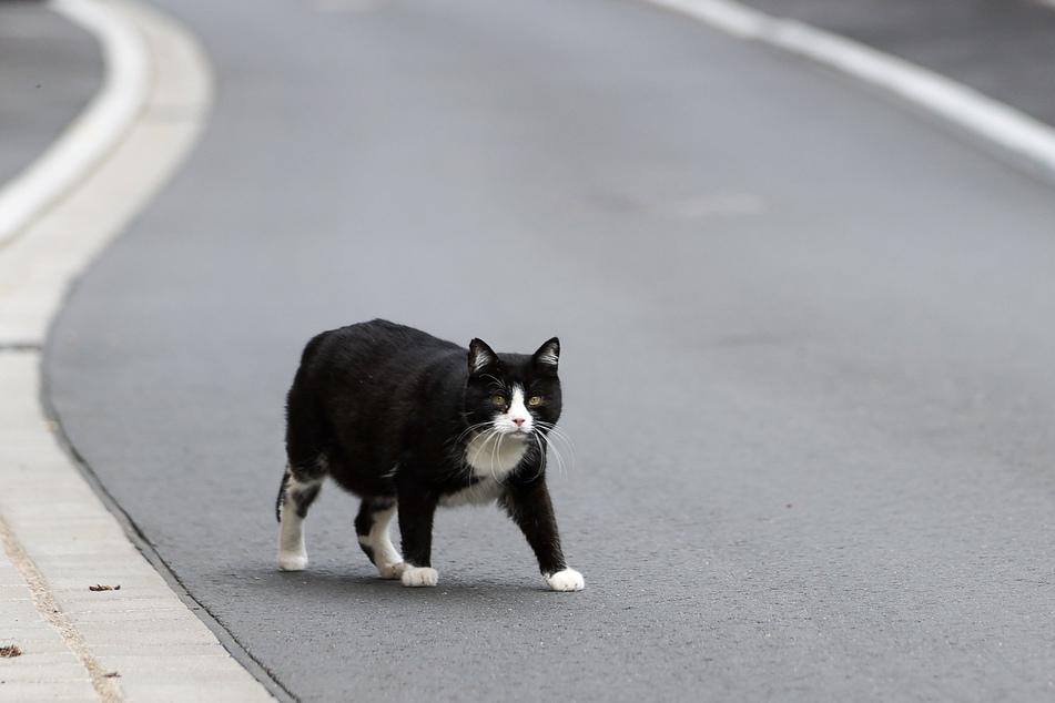 Mit 100.000 Euro: Die Kastration von streunenden Katzen wird auch in diesem Jahr von der Landesregierung in Sachsen-Anhalt unterstützt.