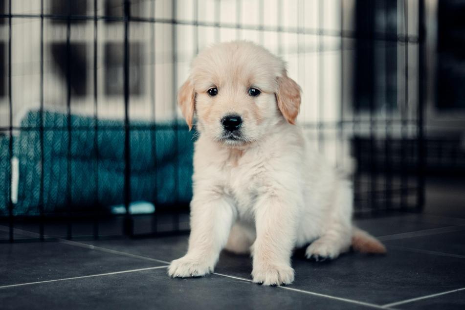 Erstausstattung Hund: Das brauchst Du für Deinen Vierbeiner