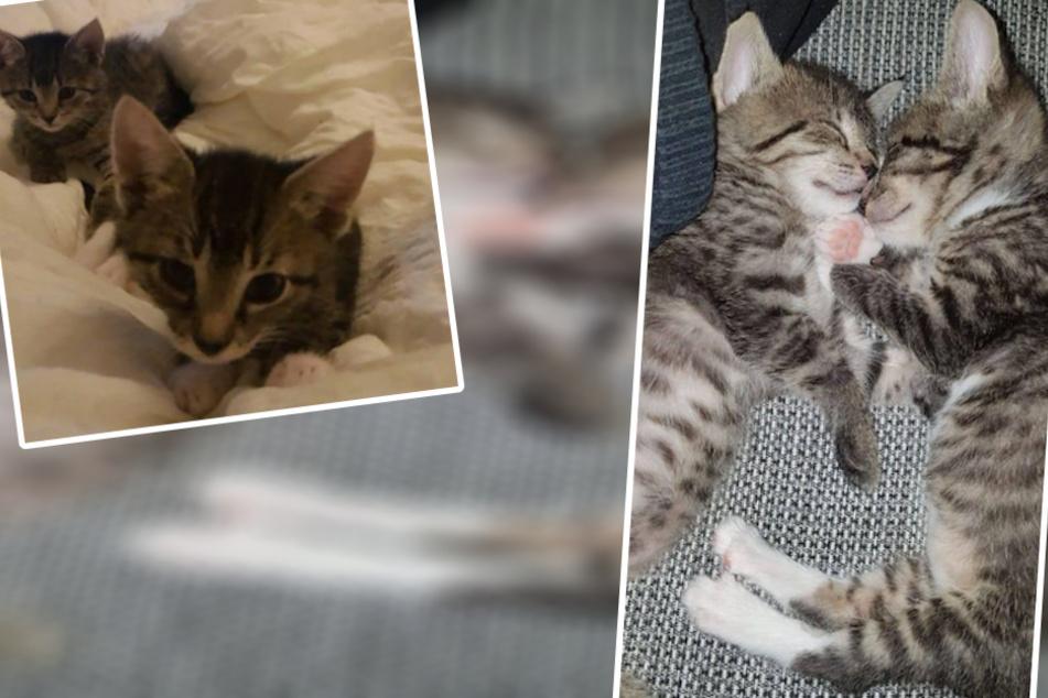 Mama hat sie nicht mehr versorgt: Luna und Whyti suchen ein neues Zuhause