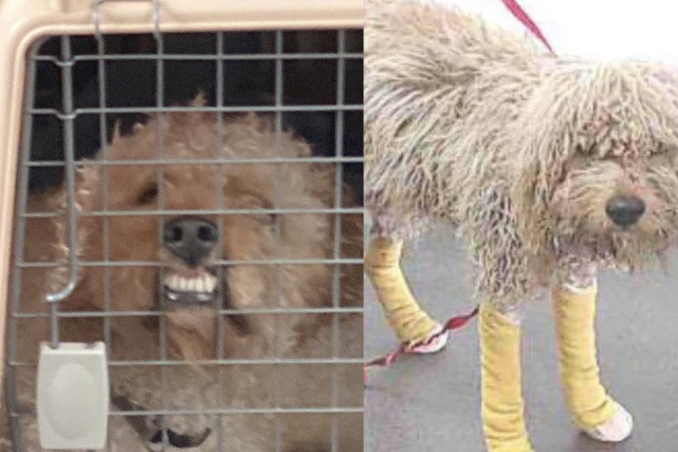 Hund grausam hinter Auto her geschleift, dann tritt eine neue Frau in sein Leben