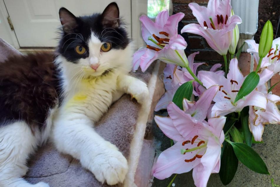 Fast hätte es ihr geliebter Willow nicht geschafft. Schuld daran sind die Lilien.