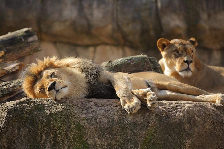 Nach Jahren erst wurden Jago und Layla Eltern.