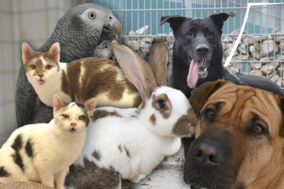 6 besondere Hunde, Katzen und mehr: Diese Haustiere suchen dringend ein Zuhause!