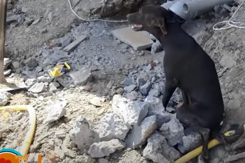 Hund sitzt merkwürdig da: Dann entdecken seine Retter den traurigen Grund