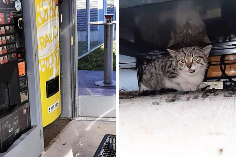 """""""Miauen aus Kaffeeautomaten"""": Tierrettung wird mit speziellem Notruf alarmiert"""