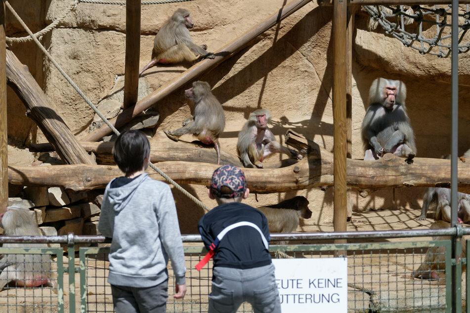 Mit einem negativen Test könnten die Menschen in den betroffenen NRW-Kommunen wieder mit Termin in den Baumarkt, in Geschäfte oder in den Zoo gehen. (Archivbild)