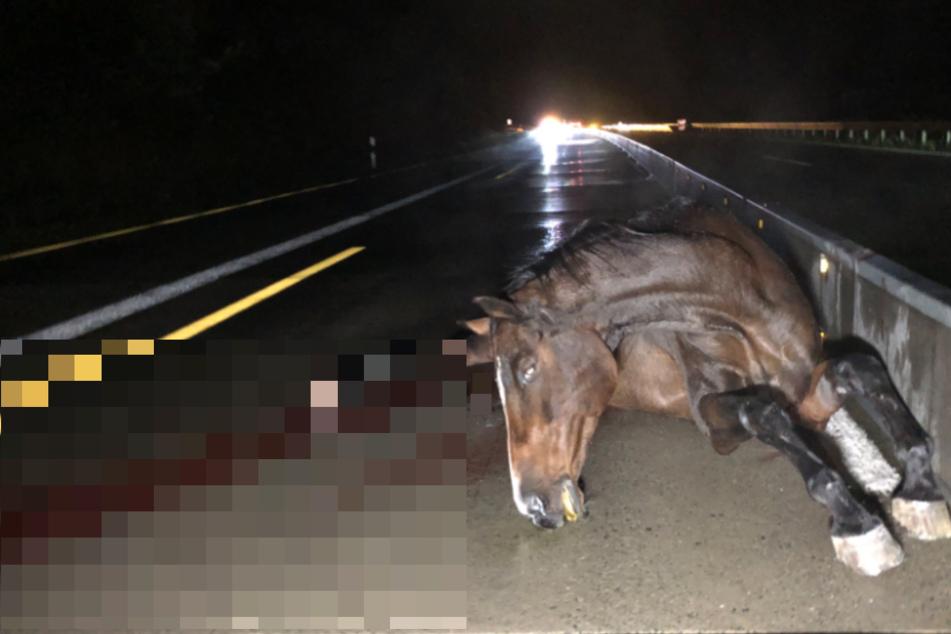 14 Pferde sorgen für Chaos und mehrere Unfälle auf der A9 in Thüringen