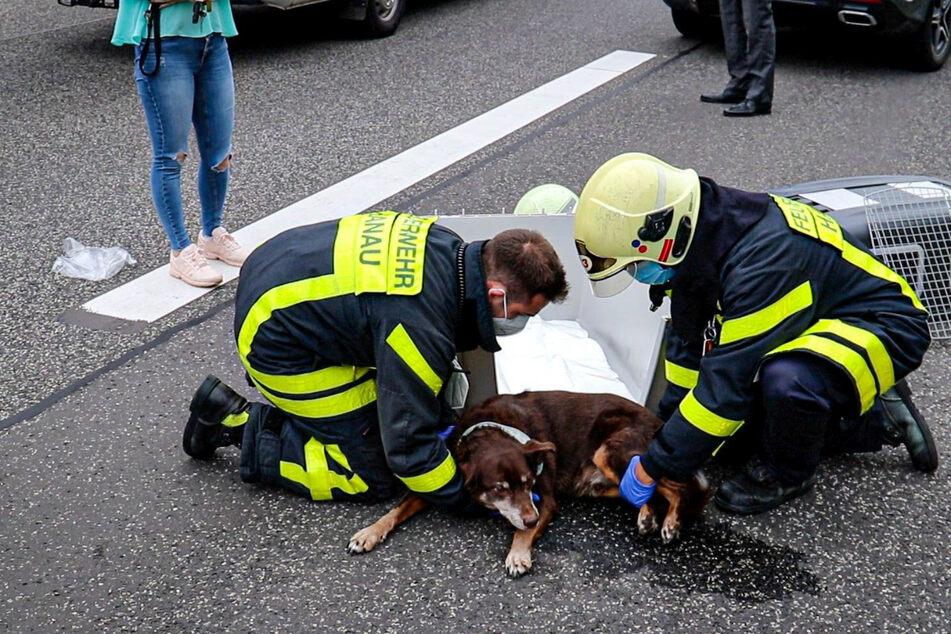 Einsatzkräfte der Feuerwehr befreiten den Hund aus dem Wagen. Er wurde schwer verletzt.