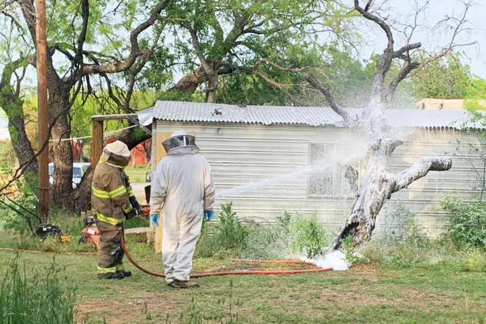Texas man tragically killed in his own yard after disturbing a bee hive