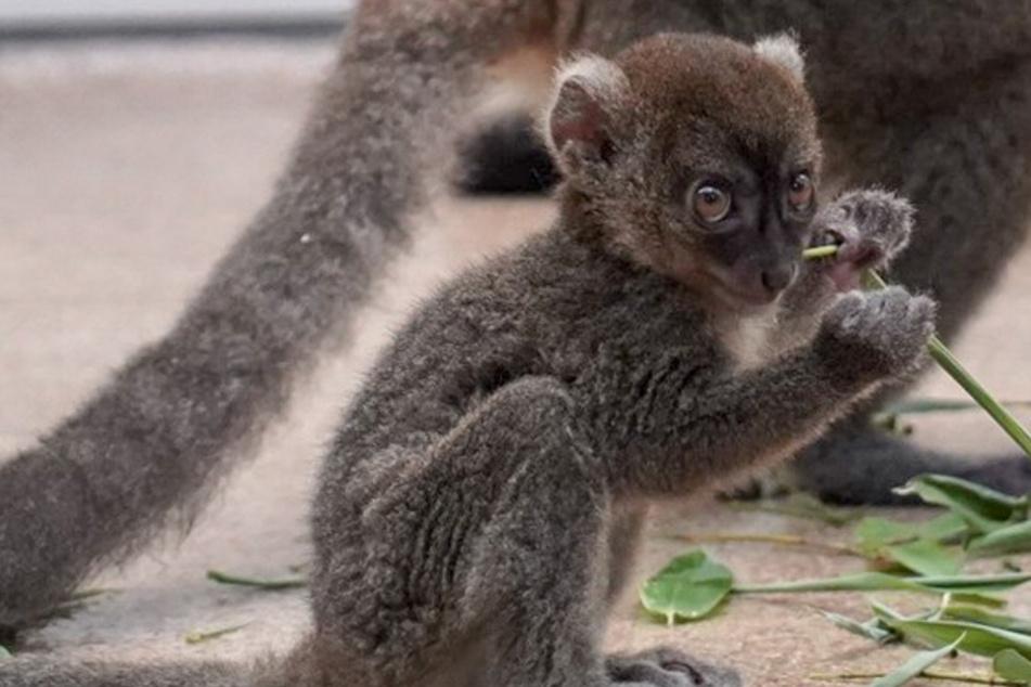 Vom Aussterben bedroht: Dieses süße Tierchen ist ein echter Kölner!