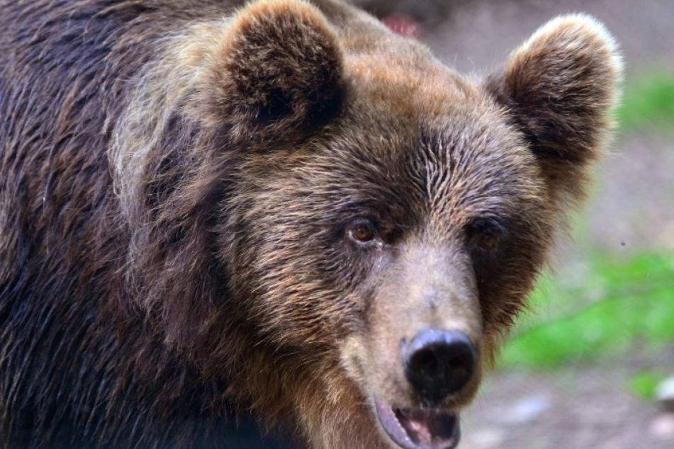 Frau bei Geburt vom Bären gestört