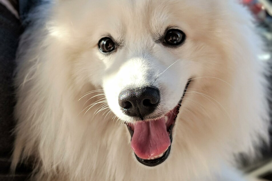 Können Hunde schwitzen? So senken sie die Temperatur!