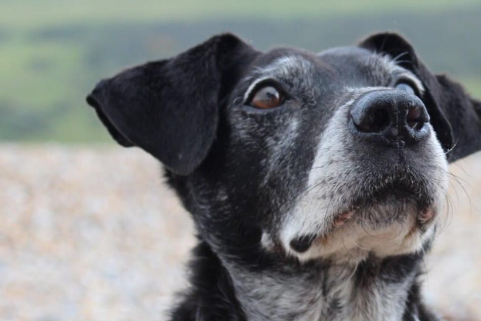 Familie verliert Hund im Urlaub und trifft eine herzergreifende Entscheidung