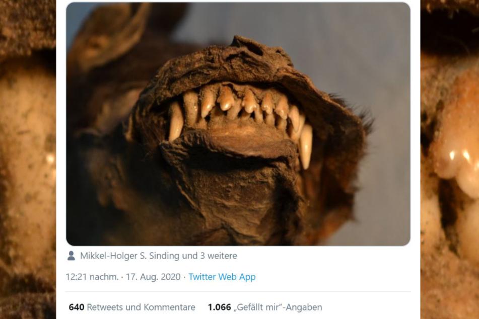 Ob diese circa 14.000 Jahre alte Kreatur Hund oder Wolf war, weiß keiner!