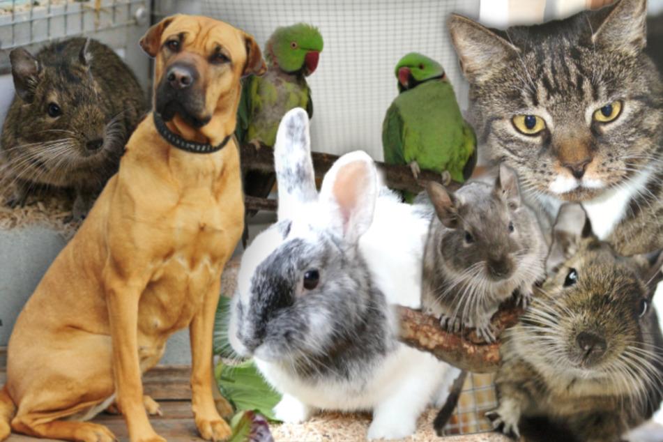 9 besondere Tiere: Hunde, Katzen und noch mehr suchen endlich ein Zuhause