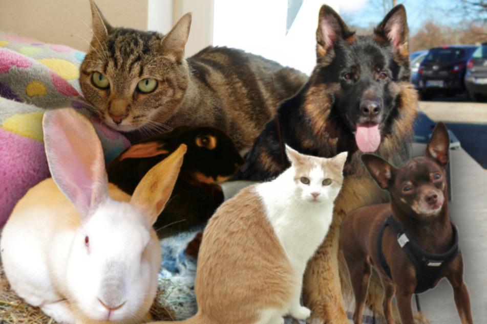 5 besondere Hunde, Katzen und Kaninchen: Diese Tiere suchen dringend ein Zuhause