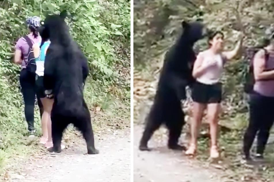 Behörden warnen davor, doch eine Frau knipst Selfies mit wildem Bär