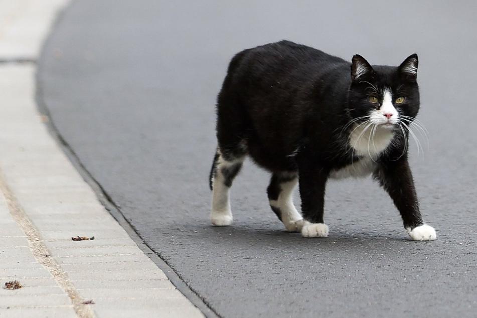 Dem Umweltministerium ein Dorn im Auge: Land will gegen Streunerkatzen vorgehen