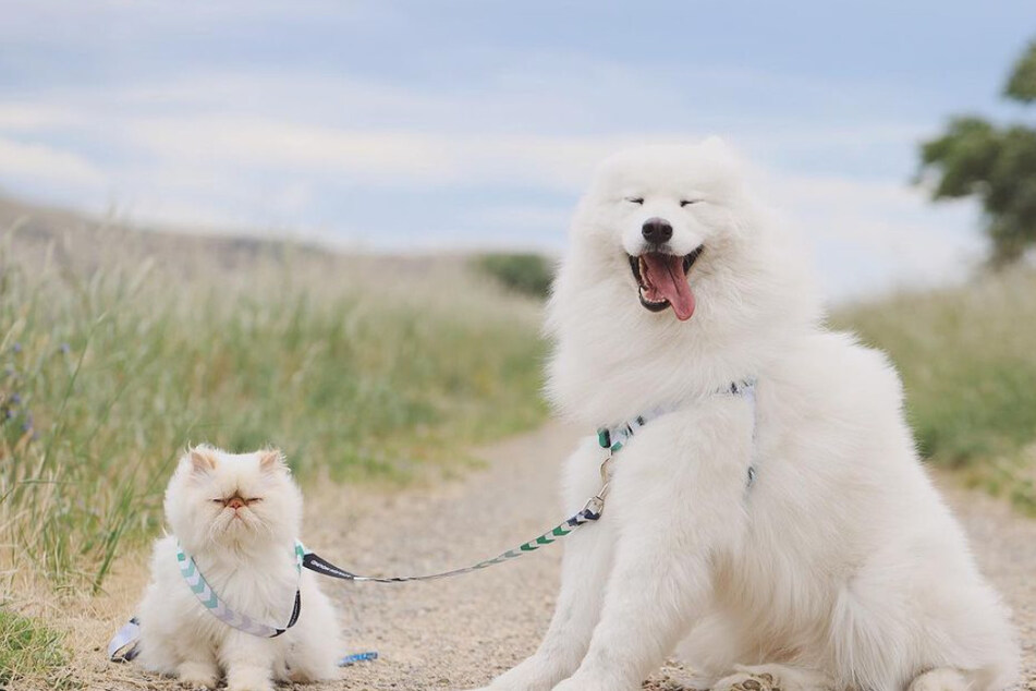 Unlikely duo: grumpy cat Romeo and happy dog Casper are inseparable.