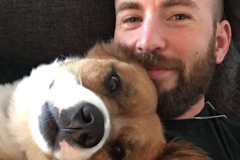Chris Evans (39) became a trending topic this weekend when he accidentally shared a NSFW picture.