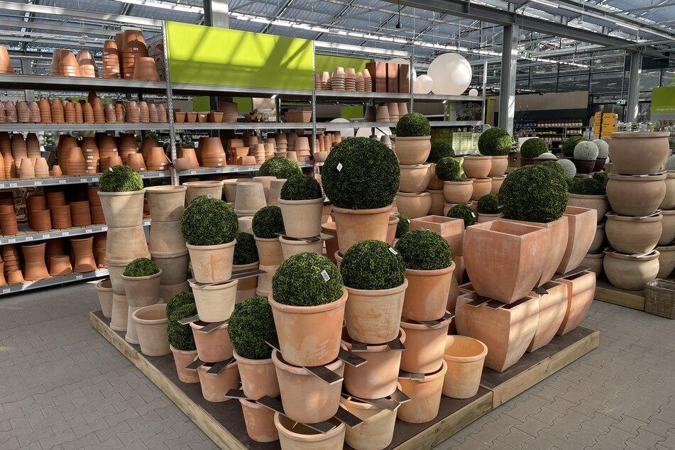 Gartencenter in Seevetal startet Aktion mit hohen Rabatten!
