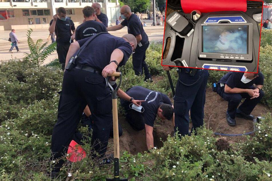 Hund hält sich für Hase und bleibt in Bau stecken: Feuerwehr mit dramatischer Rettungsaktion