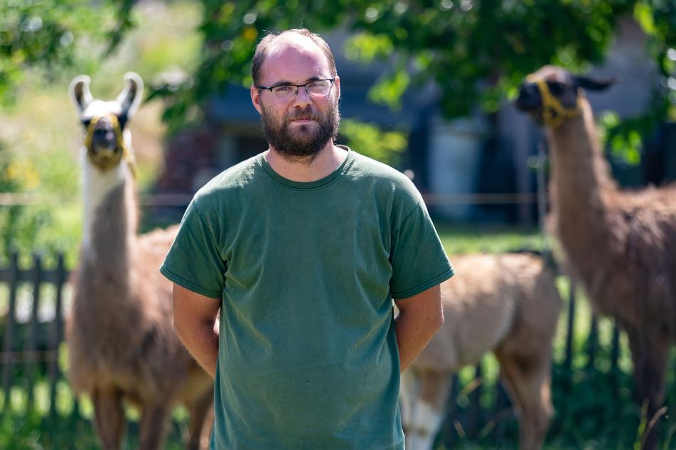 Landwirt Daniel Seumel (31) vermietet Lamas als Bio-Rasenmäher.