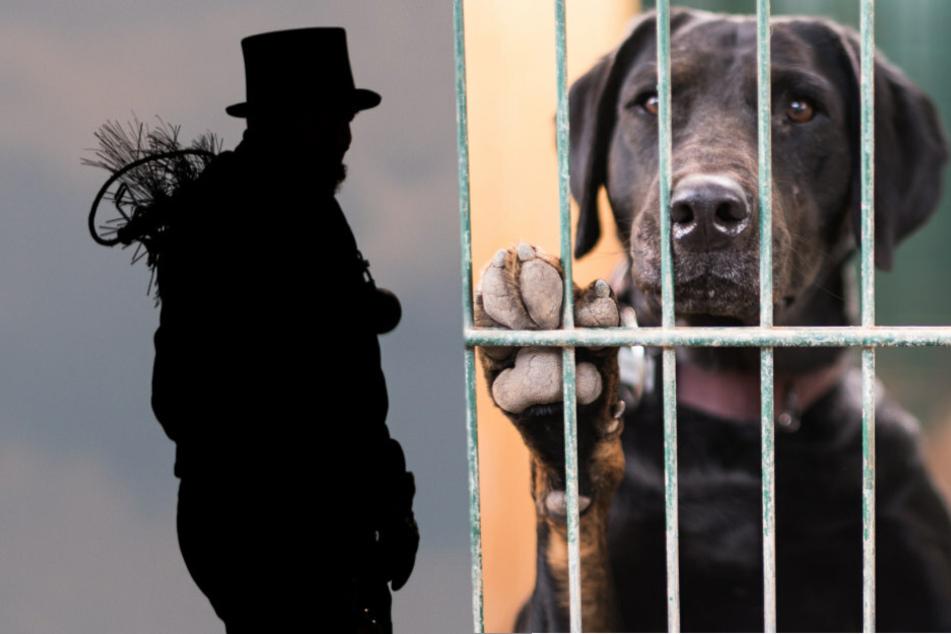 Berliner Schornsteinfeger wollen auf das Schicksal vieler schwarzer Tiere in den Tierheimen Berlins aufmerksam machen und ihr Image verbessern.