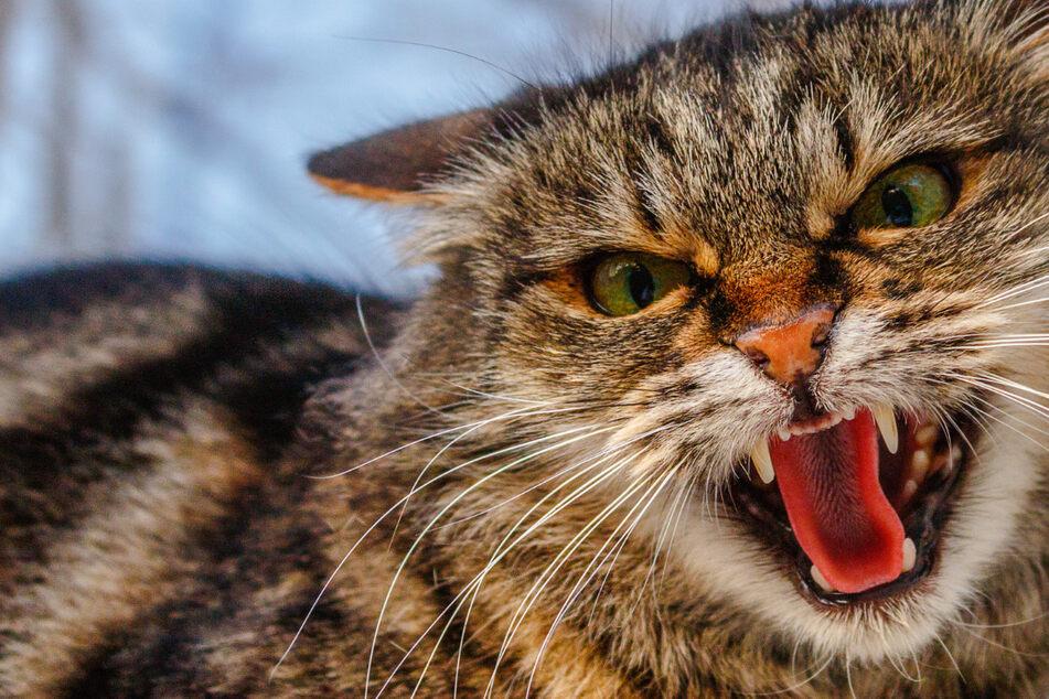 Katze arbeitet als Drogenschmuggler im Knast und fliegt auf