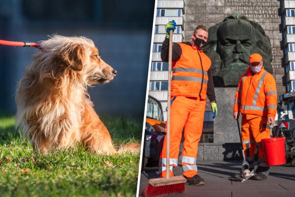 Chemnitz: ASR-Team kann ausschlafen, Tiere entspannter: Wir freuen uns über das Böllerverbot in Chemnitz