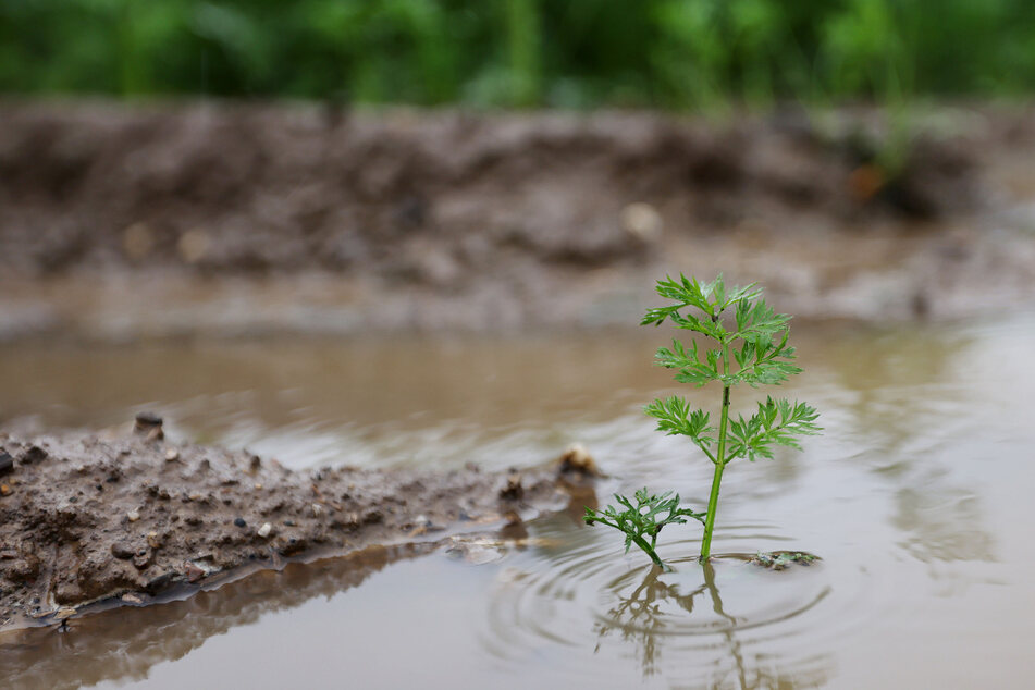 Droht noch mehr Hochwasser in NRW? Wieder Gewitter und Starkregen am Wochenende!