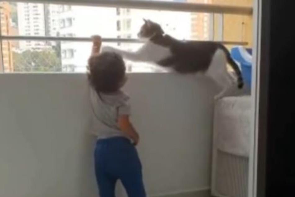 Finger weg! Der Stubentiger beschützte den kleinen Paulo, drückt ihm immer wieder die Hände weg.